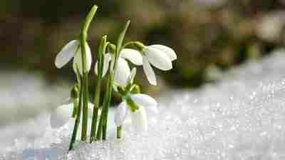Snowdrops Keep Falling On My Head...